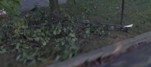 Branch Clue