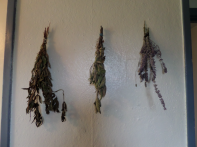 dried herbs as decoration