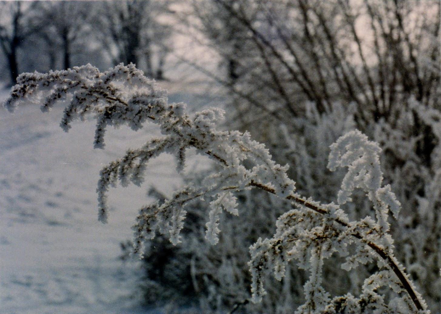 Hoar Frost 1988